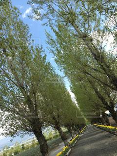 近くの木のアップの写真・画像素材[966250]