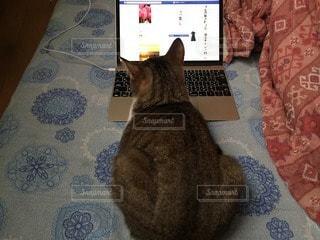 猫の写真・画像素材[12257]