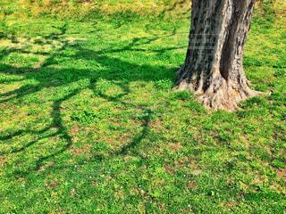 桜樹を映すライトグリーンの写真・画像素材[1089226]