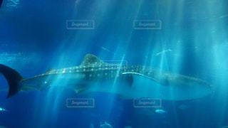水面下を泳ぐ魚たちの写真・画像素材[966473]