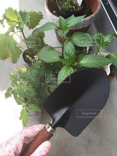 ベランダ菜園 - No.967000