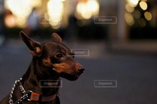 夜の散歩の写真・画像素材[986333]