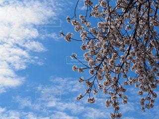 澄んだ青い空 - No.1129563