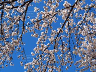 木の上に座って鳥の群れの写真・画像素材[1129564]