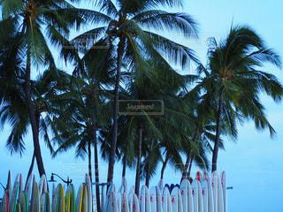 自然,海,夏,ビーチ,暑い,旅行,ハワイ,Hawaii,ワイキキ