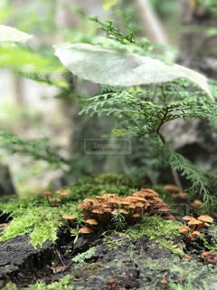近くの緑豊かな緑の森の写真・画像素材[968493]