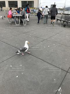 鳥,アメリカ,旅行,港,カモメ