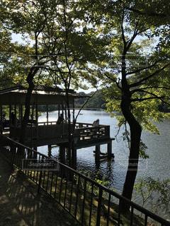 京都の宝ヶ池公園の写真・画像素材[1013753]