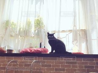 窓の前に座っている猫の写真・画像素材[971994]