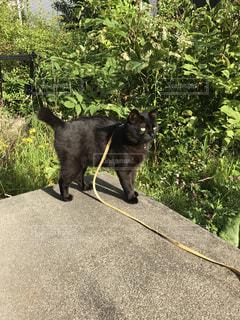 外大好き猫の写真・画像素材[972068]