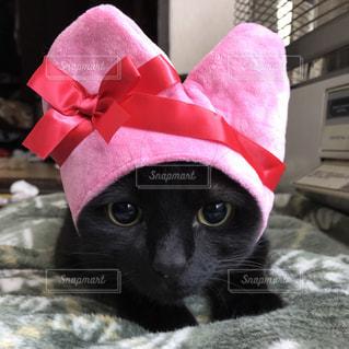 ハート型のかぶりものをかぶった黒猫の写真・画像素材[974633]