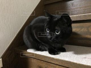 階段にいる黒猫の写真・画像素材[974706]
