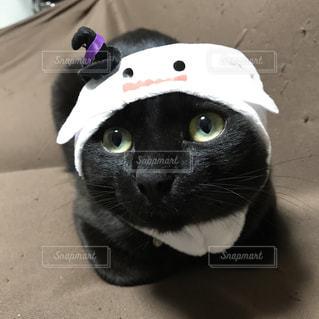 ビー玉みたいに綺麗な目のオバケ猫の写真・画像素材[975797]