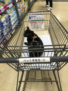 猫と猫用品のお買い物の写真・画像素材[975813]