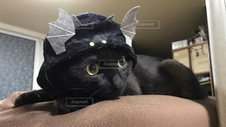 かっこいいコウモリ猫の写真・画像素材[976944]