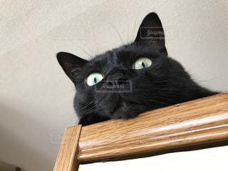 高みの見物猫の写真・画像素材[976984]