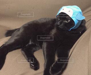 ペンギンのかぶりものをかぶった猫の写真・画像素材[977886]