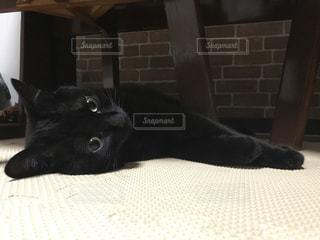 だらける猫の写真・画像素材[977896]