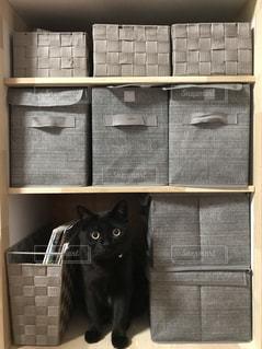 隙間にぴったり猫の写真・画像素材[980064]