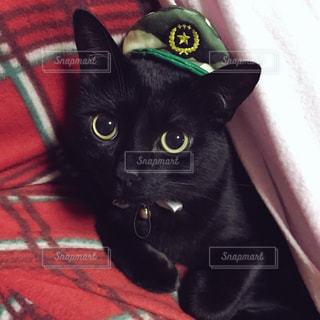 迷彩柄の帽子をかぶった猫の写真・画像素材[980068]