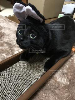 うさぎのかぶりものをかぶった猫の写真・画像素材[980069]