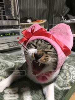 ハート型のかぶりものをかぶった子猫の写真・画像素材[981327]