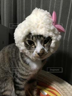 ふわふわのハート付きかぶりものの子猫の写真・画像素材[981331]