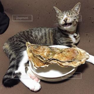 子猫 奇跡の一枚の写真・画像素材[983640]