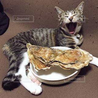 子猫 奇跡の一枚 その2の写真・画像素材[983641]