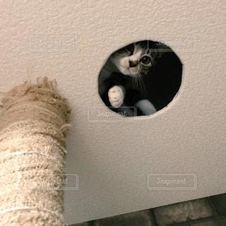 キャットタワーの穴から覗く子猫の写真・画像素材[983655]