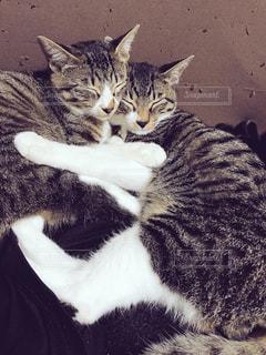 くっついて寝る子猫たちの写真・画像素材[983656]
