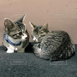 まったりしている子猫たちの写真・画像素材[983680]