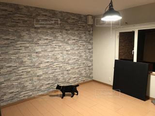 建物の前の床の上を歩く猫の写真・画像素材[1010542]
