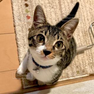 カメラを狙う子猫の写真・画像素材[1047069]