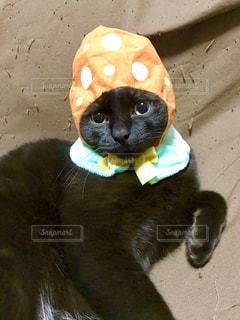 イースターエッグのかぶりものをかぶった黒猫の写真・画像素材[1083795]
