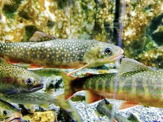 おたる水族館の魚の写真・画像素材[1083800]