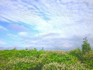 背景の木と大規模なグリーン フィールドの写真・画像素材[1117316]