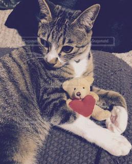 猫,赤,かわいい,ねこ,ハート,ぬいぐるみ,子猫,抱っこ,くま,テディベア,ネコ,クマ