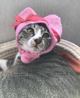 猫,ピンク,かわいい,ねこ,ハート,子猫,リボン,かぶりもの,ネコ,蛇目