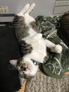 変な寝方の猫の写真・画像素材[1138503]