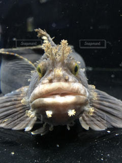 魚の上に座っている鳥の写真・画像素材[1198217]