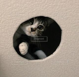 カメラを見ている猫の写真・画像素材[1202254]