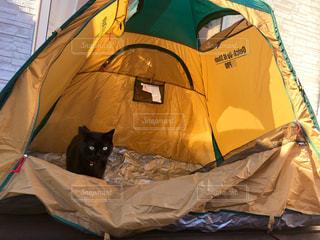 テントの猫の写真・画像素材[2328656]