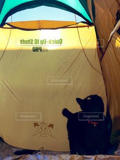 テントの猫の写真・画像素材[2328667]