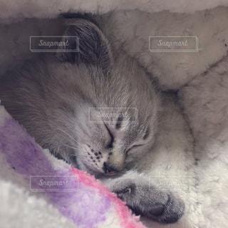 寝る子猫の写真・画像素材[2328673]