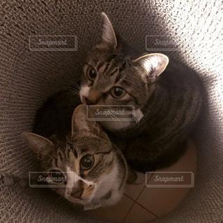 横になってカメラを見ている猫の写真・画像素材[2328685]