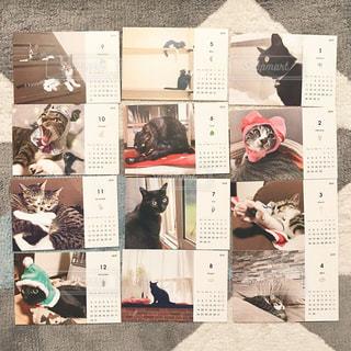 ペットのねこのオリジナルカレンダーの写真・画像素材[3013181]