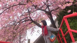 女性,恋人,風景,花,桜,屋外,ピンク,赤,川,花見,景色,樹木,お花見,人,デート,草木,さくら,ブロッサム