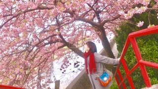 女性,恋人,1人,風景,花,春,桜,屋外,赤,花見,満開,樹木,お花見,人,笑顔,デート,手すり,さくら,桜満開
