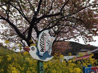 空,花,春,秋,桜,屋外,看板,菜の花,樹木,草木,河津,河津さくらまつり